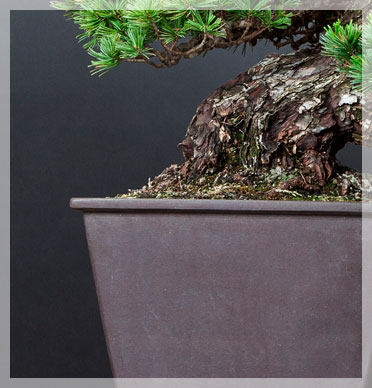 Bonsai Dünger für schnellen Wachstum